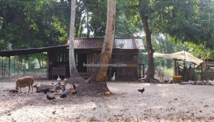 accommodation, beachside, Kampung Pueh, lundu, Borneo, resort, tree house, 三馬丹, 伦乐, 古晋住宿, 沙捞越, 農牧海濱渡假村, 马来西亚, tourism, tourist attraction, guide tips,
