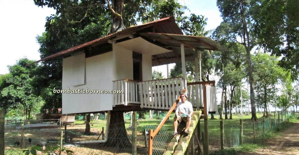 accommodation, beachside, Borneo, lundu, malaysia, resort, tree house, 三馬丹, 伦乐, 古晋住宿, 沙捞越, 農牧海濱渡假村, 马来西亚, tourism, tourist attraction, guide tips