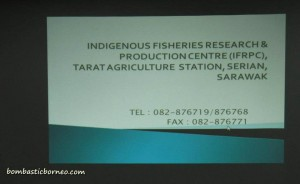 Design, development, fish breeder, fish farming, fresh water fish, IDEAS, Innovation, Invention, empurau, Malaysia, Serian, UITM, Universiti Teknologi MARA, 忘不了鱼