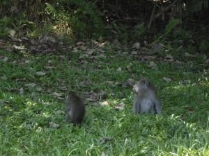 adventure, Bornean bearded pig, hiking, jungle, Kuching, malaysia, mangrove forest, nature, outdoors, proboscis monkey, rainforest, Sarawak, Taman Negara Bako, Teluk Assam Beach, Tourism, tourist attraction, travel guide, trekking,
