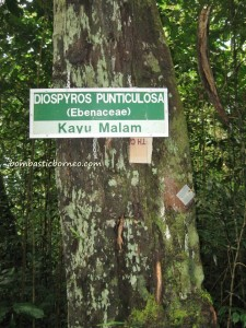 adventure, air terjun, gully, Gunung Santubong, hiking, jungle, Mountain Santubong, nature, outdoors, rainforest, Tourism, tourist attraction, travel guide, trekking, Waterfall