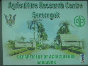 agro biotechnology, dabai, dayak brinjal, food technology, indigenous vegetables, Innovation, Invention, organic, pest management, Pusat Penyelidikan Pertanian Semongok, UITM, Universiti Teknologi MARA
