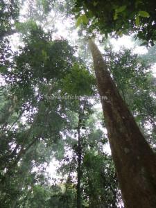authentic, Desa Kabo Jaya, east kalimantan timur, ecotourism, ecowisata, hiking, indonesia, National park, Obyek wisata, orang utan, prevab, rainforest, Sangatta, taman nasional kutai, Tourism, tourist attraction, wild plant,
