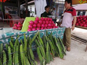 authentic, Dragon fruits, Ethnic, Exotic Fruits, indigenous, kalimantan timur, Kaltim, native, Obyek wisata, Samarinda Backpackers, 火龙果, Sepinggan Airport