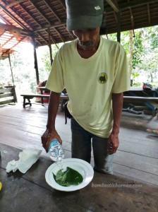 Medicinal, Borneo, east kalimantan, ecotourism, hiking, indonesia, Kutai National park, nature, Obyek wisata, outdoors, primary jungle, rainforest, Sangatta, trekking, wild plant, wildlife