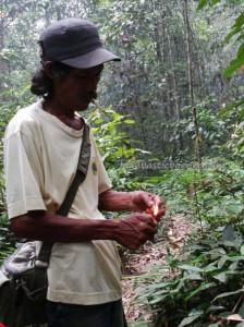 Borneo, Desa Kabo Jaya, east kalimantan, ecotourism, ecowisata, hiking, National park, nature, outdoors, primary jungle, rainforest, Sangatta, Tourism, tourist attraction, trekking, wild plant, wildlife