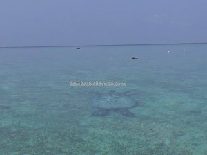 Berau, Borneo, Derawan Archipelago, dive center, diving spot, east kalimantan timur, nature, Obyek wisata, outdoors, pasir putih, Pulau, Sandy white beaches, Tourism, tourist attraction, travel guide, underwater,