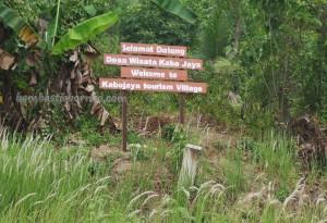 adventure, authentic, Borneo, ecowisata, indonesia, kalimantan timur, Kutai National park, nature, Obyek wisata, orang utan, prevab, primary jungle, rainforest, taman nasional, Tourism, trekking, wild plant, wildlife