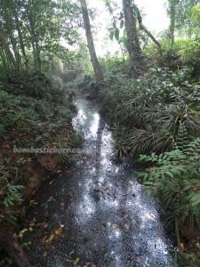 adventure, Desa Kabo Jaya, east kalimantan, ecowisata, hiking, nature, Obyek wisata, orang utan, outdoors, prevab, primary jungle, rainforest, Sangatta, taman nasional kutai, tourist attraction, trekking, wild plant, wildlife