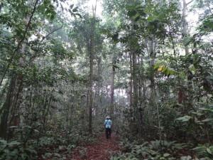 adventure, ecotourism, ecowisata, hiking, indonesia, nature, Obyek wisata, orang utan, outdoors, prevab, rainforest, Sangatta, taman nasional kutai, Tourism, tourist attraction, wild plant, wildlife