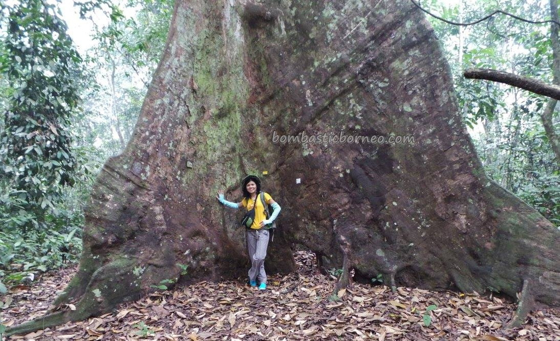adventure, Borneo, authentic, east kalimantan, ecowisata, hiking, Obyek wisata, orang utan, outdoors, prevab, primary jungle, rainforest, Sangatta, taman nasional kutai, tourist attraction, trekking, wild plant, wildlife