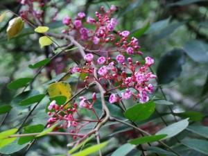 Borneo, Desa Kabo Jaya, east kalimantan timur, ecowisata, hiking, Obyek wisata, outdoors, primary jungle, rainforest, Sangatta, taman nasional kutai, Tourism, tourist attraction, trekking, wildlife,