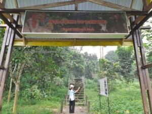adventure, Borneo, Desa Kabo Jaya, hiking, ecotourism, ecowisata, indonesia, nature, Obyek wisata, outdoors, primary jungle, rainforest, Sangatta, taman nasional kutai, tourist attraction, wild plant, wildlife