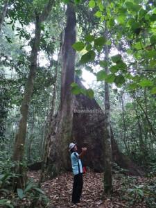 adventure, Borneo, east kalimantan, ecowisata, hiking, nature, Obyek wisata, orang utan, outdoors, prevab, primary jungle, rainforest, taman nasional kutai, tourist attraction, trekking, wild plant, wildlife,