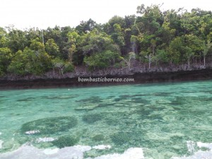 Derawan Archipelago, green sea turtle, Paradise Island Resort, marine life, nature, Obyek wisata, outdoors, pasir putih, Pulau, Sandy white beaches, Tourism, tourist attraction, travel guide, underwater, village