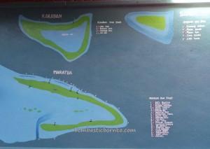 Berau, Borneo, Derawan Archipelago, dive center, east kalimantan timur, green sea turtle, Paradise Island Resort, marine life, nature, Obyek wisata, outdoors, beach, Tourism, tourist attraction, travel guide, underwater,