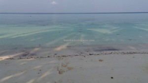 Berau, Derawan Archipelago, dive center, diving spot, green sea turtle, homestay, Paradise Resort, marine life, Obyek wisata, outdoors, pasir putih, Pulau, Sandy white beaches, tourist attraction, travel guide, underwater, village