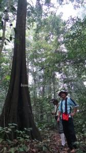 adventure, east kalimantan timur, ecotourism, ecowisata, hiking, Kutai National park, nature, Obyek wisata, orang utan, outdoors, prevab, primary jungle, rainforest, Sangatta, tourist attraction, trekking, wild plant,