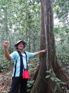 adventure, east kalimantan timur, ecotourism, ecowisata, hiking, Taman Nasional Kutai, nature, Obyek wisata, orang utan, outdoors, prevab, primary jungle, rainforest, Sangatta, Tourism, tourist attraction, trekking, wild plant,
