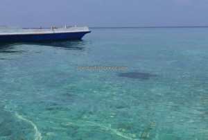 Berau, Borneo, Derawan Archipelago, dive center, diving spot, east kalimantan timur, green sea turtle, homestay, Paradise Island Resort, nature, Obyek wisata, outdoors, pasir putih, Sandy white beaches, sunset, Tourism, travel guide, underwater,