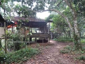 adventure, Borneo, Desa Kabo Jaya, east kalimantan Timur, ecotourism, ecowisata, indonesia, Kutai National park, nature, Obyek wisata, outdoors, primary jungle, rainforest, taman nasional, tourist attraction, trekking, wild plant, wildlife,