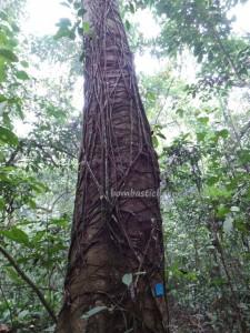 adventure, authentic, Borneo, east kalimantan, ecotourism, ecowisata, Kutai National park, nature, Obyek wisata, orang utan, outdoors, primary jungle, rainforest, Sangatta, tourist attraction, trekking, wild plant, wildlife