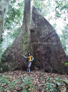 adventure, Borneo, east kalimantan timur, ecotourism, ecowisata, hiking, Kutai National park, nature, outdoors, prevab, primary jungle, rainforest, Sangatta, tourist attraction, trekking, wild plant, wildlife