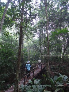 adventure, east kalimantan timur, ecotourism, ecowisata, hiking, Kutai National park, nature, Obyek wisata, orang utan, outdoors, prevab, primary jungle, rainforest, Sangatta, tourist attraction, trekking, wildlife
