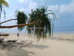 adventure, beach, Berau, coral, Derawan Archipelago, diving spot, east kalimantan timur, green turtle, Manta Alfredi, Manta ray, marine life, Pari Hantu, Pulau, Dive Lodge Resort, snorkeling, tourist attraction, travel guide,