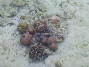 beach, Borneo, Derawan Archipelago, green turtle, Manta Alfredi, Manta ray, marine life, Obyek wisata alam, outdoors, Pari Hantu, Pulau Sangalaki Island, Dive Lodge Resort, snorkeling, Tourism, travel guide, underwater, vacation