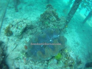 adventure, Bajau Fishing village, Berau, Celebes Sea, coral, Dive Lodge Resort, East Kalimantan Timur, green sea turtle, hidden paradise, marine life, Obyek wisata, outdoors, Tourism, tourist attraction, travel guide, underwater, vacation