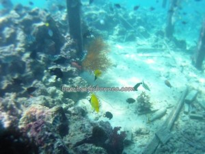 adventure, Berau, Borneo, Celebes Sea, coral, Derawan Archipelago, Dive Lodge Resort, Island, hidden paradise, marine life, nature, Obyek wisata, outdoors, tourism, tourist attraction, underwater, vacation,
