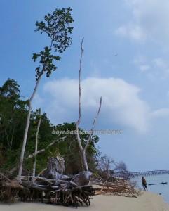 nature, beach, Berau, Borneo, green turtle, hidden paradise, Manta ray, marine life, outdoors, Island, Dive Lodge Resort, snorkeling, Tourism, tourist attraction, travel guide, underwater, vacation