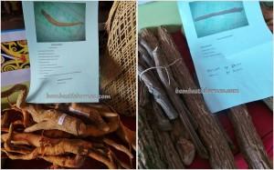 authentic, Borneo, ethnic, Irau Festival, indigenous, Kota Malinau, Obyek wisata, orang asal, orang asli, pesta adat, Suku Dayak, Tidung, Tourism, obat, travel guide, tribal, tribe,