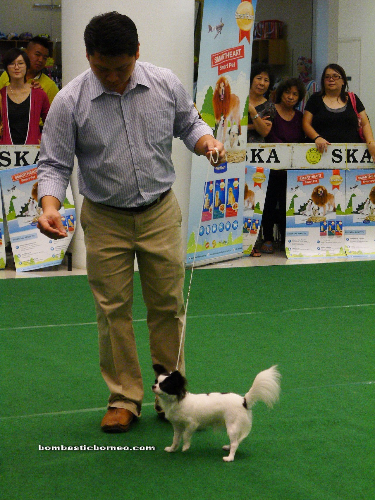Top Five All Breed Pedigree Dogs - Circus
