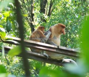 adventure, Borneo, hiking, jungle, North Kalimantan Utara, Kawasan Konservasi, Kota Tarakan, Mangrove Forest park, Nature Reserve, obyek wisata alam, outdoors, Protected Animals, Tourism, tourist attraction, travel guide, trekking,