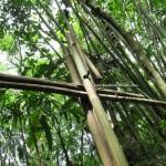 adventure, authentic, bengoh dam, Bidayuh, Ethnic, hiking, trekking, indigenous, rainforest, Kampung, Kuching, Padawan, Malaysia, nature, outdoors, Tourism, travel, tribe,