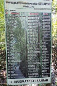 adventure, Bekantan, hiking, jungle, North Kalimantan Utara, Kawasan Konservasi Mangrove, Kota, Conservation Area, Monyet Belanda, Nature Reserve, obyek wisata alam, outdoors, proboscis monkey, Protected Animals, Tourist attraction, trekking, wildlife,
