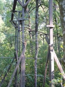 adventure, hiking, jungle, North Kalimantan, Kawasan Konservasi Mangrove, Kota, Forest Conservation Area, Monyet Belanda, Nature Reserve, obyek wisata alam, proboscis monkey, Protected Animals, Tourism, tourist attraction, travel guide, trekking,