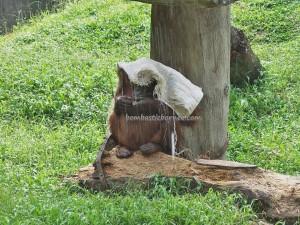 Lok Kawi Wildlife Park, Malaysia, Borneo, Penampang, Botanical Garden, Zoo, Sabah, Orang utan, proboscis monkey, jungle, nature, outdoors, Tourism, tourist attraction, travel guide, Useful information,