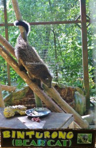 Lok Kawi Park, Penampang, Botanical Garden, Zoo, proboscis monkey, pygmy elephants, Wreathed hornbill, jungle, nature, outdoors, Tourism, tourist attraction, travel guide, Useful information, 旅游景点, 沙巴野生动物园