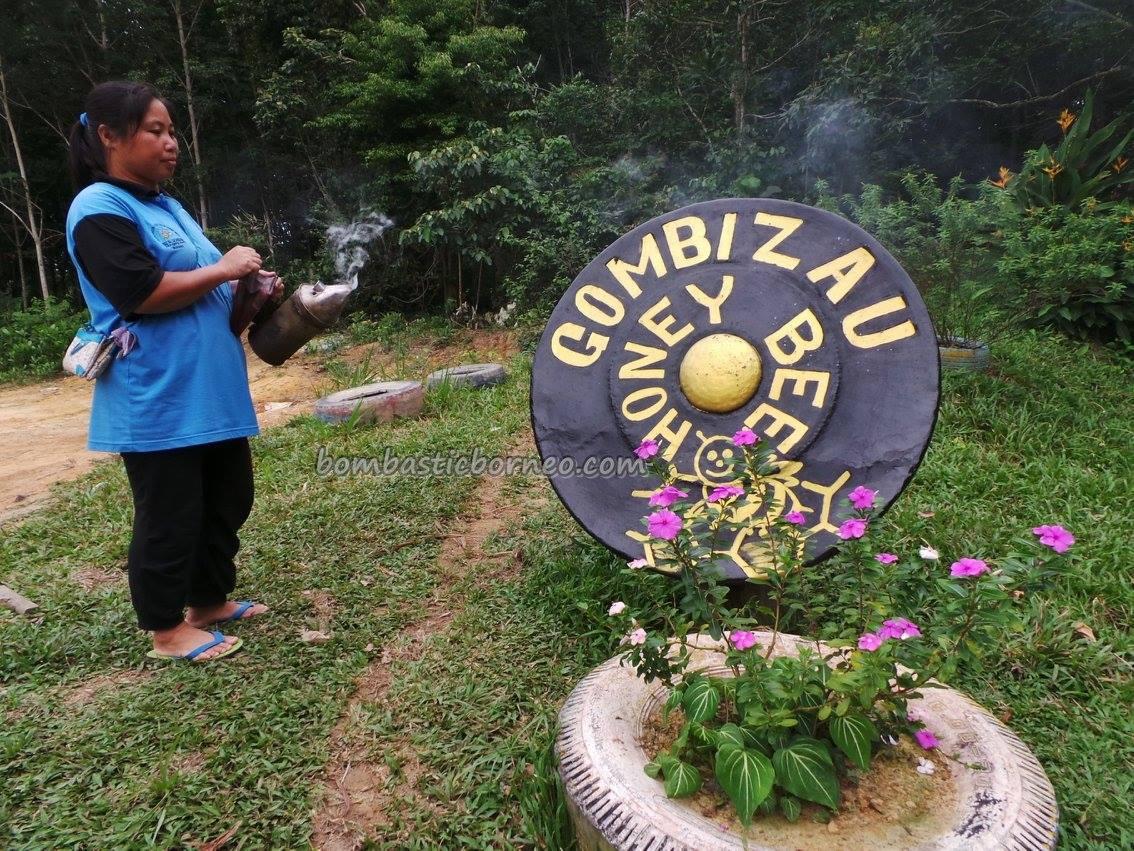 authentic, healthy, farm, indigenous, Kampung, lebah, madu, Kudat, malaysia, Matunggong, native, nature, organic food, tourist attraction, travel guide, Rungus tribe, 养蜂場