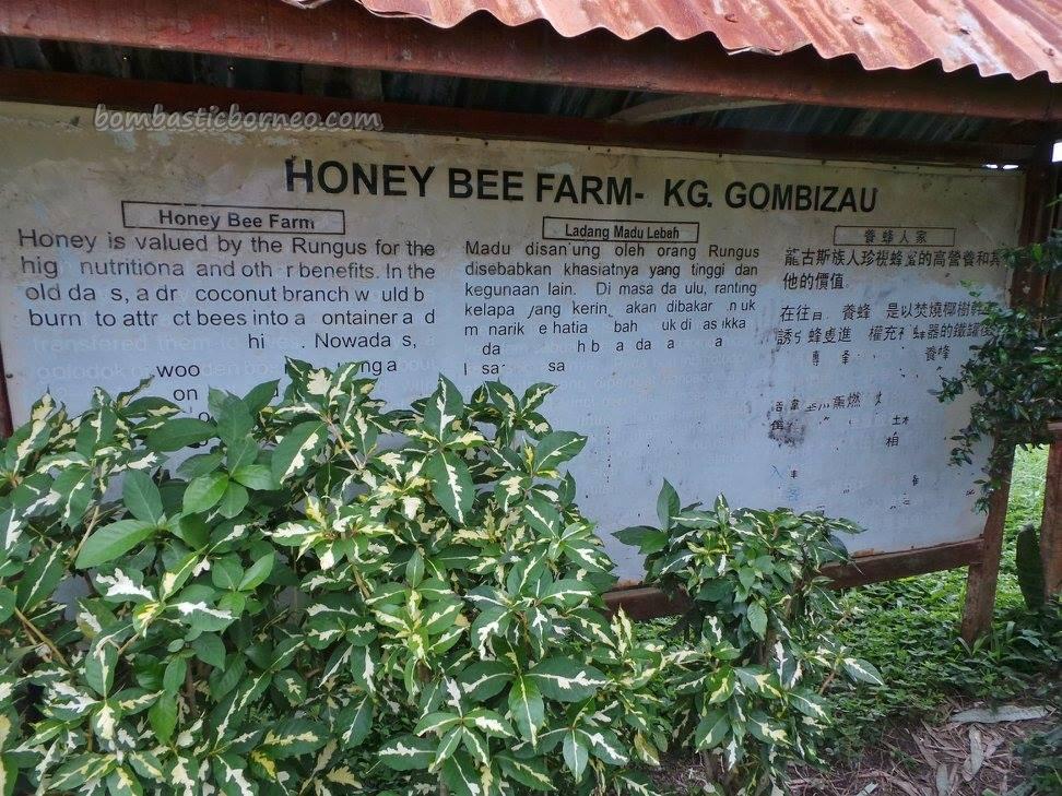 adventure, farm, indigenous, Kampung, lebah, madu, Kudat, Borneo, Matunggong, native, nature, organic food, tourist attraction, tourism, Rungus tribe, 贡比绍村, 养蜂場