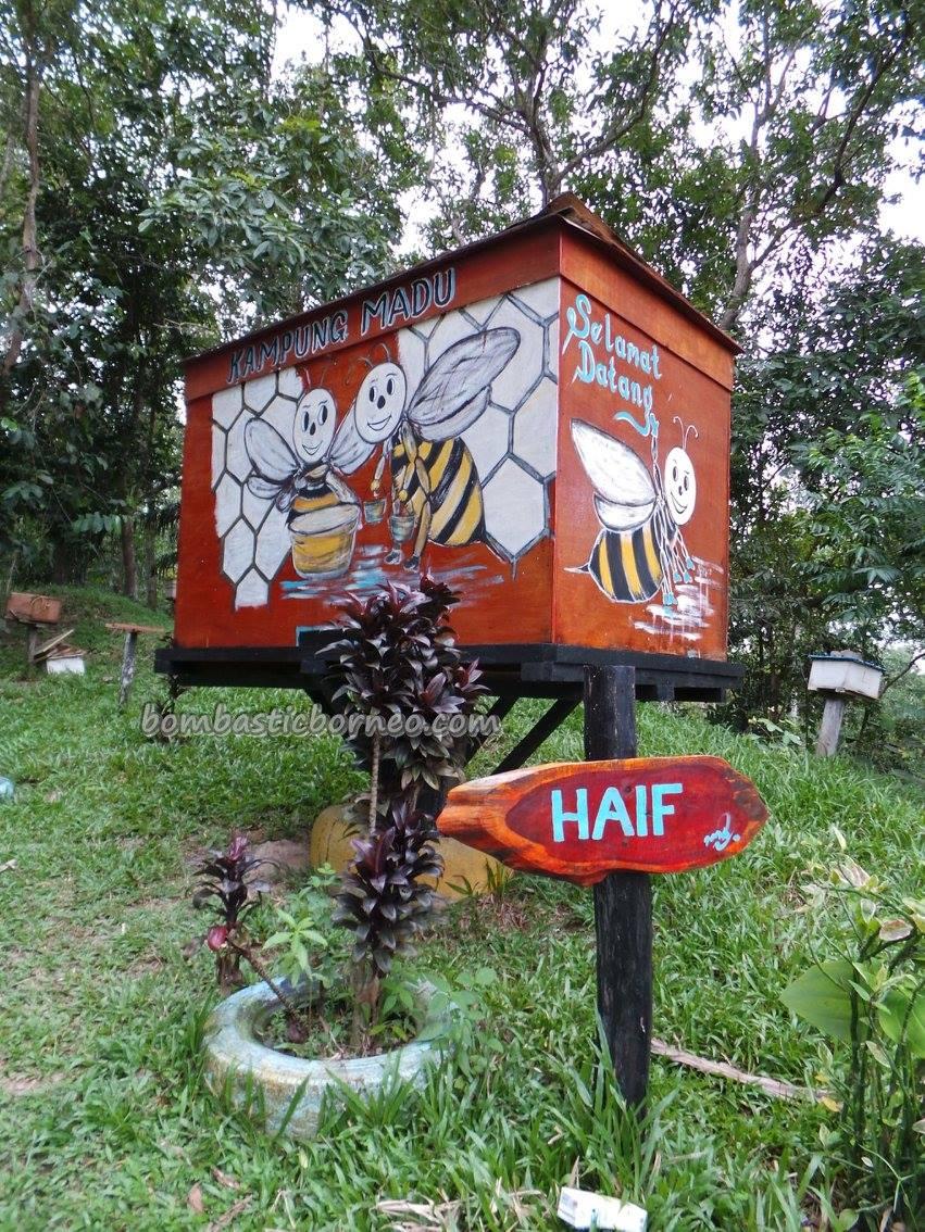 adventure, authentic, healthy, village, lebah, madu, Kudat, Borneo, Matunggong, native, nature, organic food, tourist attraction, travel guide, Rungus tribe, 贡比绍村, 養蜂場