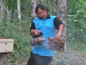 adventure, authentic, honey bee farm, indigenous, village, lebah, native, nature, organic food, Tourism, tourist attraction, traditional, Matunggong, Kudat, rungus tribe, 贡比绍村, 養蜂場