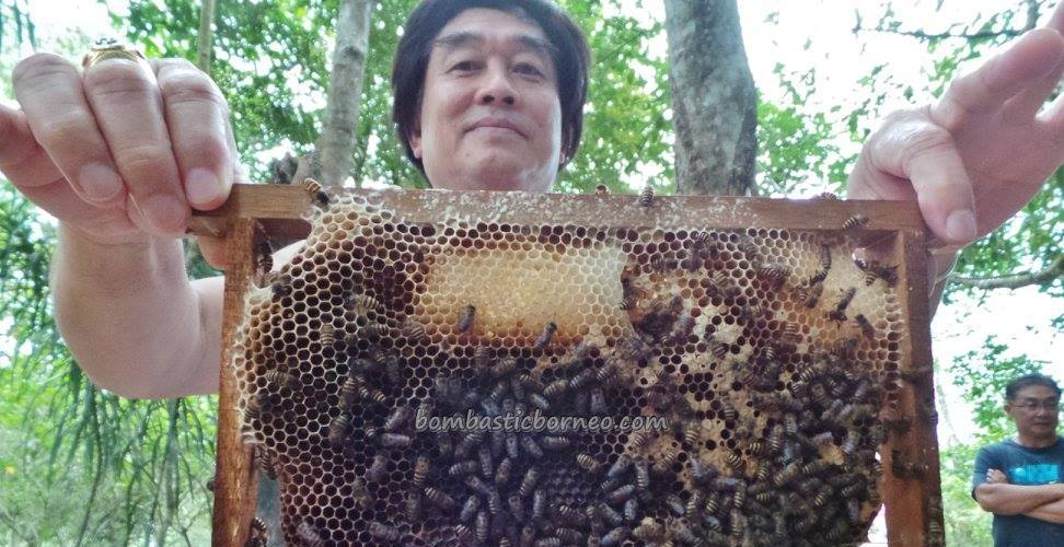 adventure, authentic, Borneo, bee farm, Kampung, village, lebah, Kudat, Matunggong, organic food, Tourism, tourist attraction, traditional, travel guide, Rungus tribe, 贡比绍村, 養蜂場