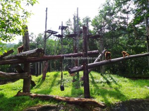 Lok Kawi Wildlife Park, Borneo, Penampang, Botanical Garden, Zoo, Orangutan, Malayan tiger, proboscis monkey, jungle, nature, outdoors, Tourism, tourist attraction, Useful information