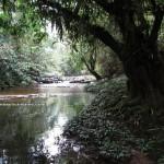 adventure, outdoor, nature, air terjun, bamboo bridge, Borneo Heights, native, jungle trekking, rainforest, Kampung Kiding, village, tour guide, tourist attraction, traditional, highlands,