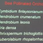 Biology Studies, Fruit Fly, nature, Peninsular, Pollination, Wild Orchid, 传粉者, 授粉, 果蝇, 生物学研究, 腐肉蝇, 蜜蜂, 野生兰花, 马来西亚