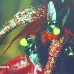 Bee, Biology Studies, flora, Flower, Fruit Fly, Peninsular, Pollination, Wild Orchid, 传粉者, 授粉, 果蝇, 生物学研究, 腐肉蝇, 蜜蜂, 野生兰花, 马来西亚